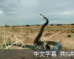 冷血生命 (中文字幕)