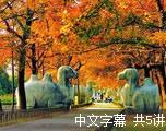 发现南京(中文字幕)