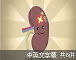 可汗学院公开课:保健与医学-肾系统